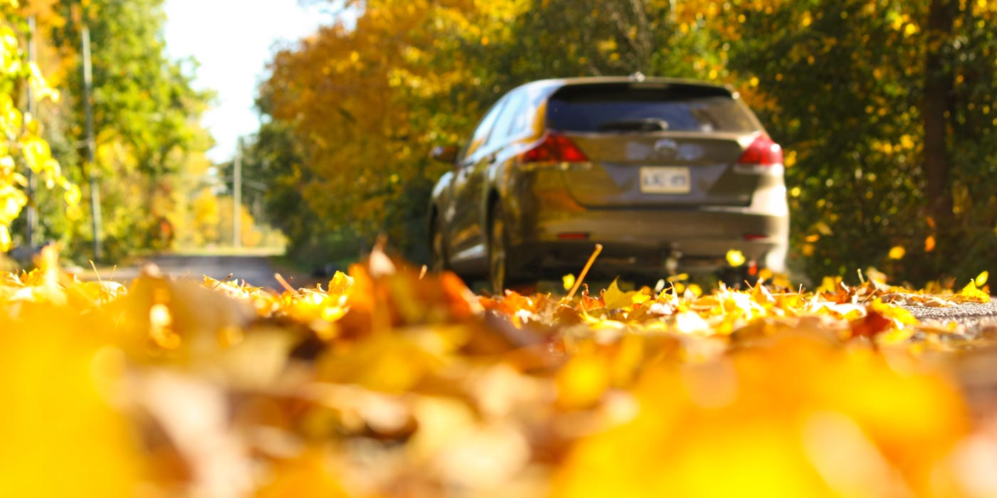 Thanksgiving-Driving