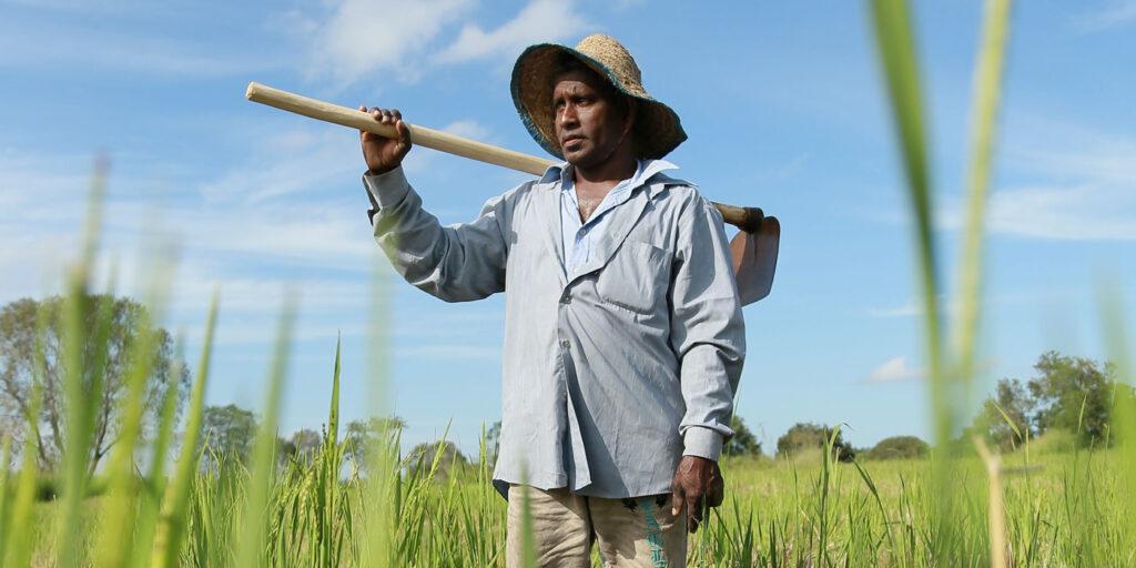 GRI-Rice-farmer-paddy-field