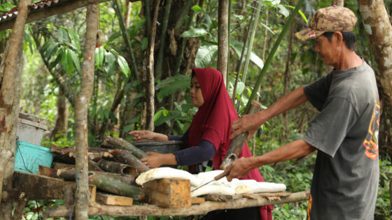 Sustainable-Rubber-Supply-Chain_Continental_GIZ-Canopy-Indonesia